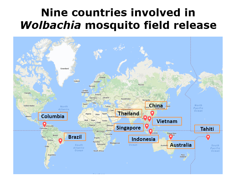 Wolbachia strategy used in other countries